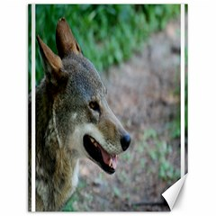 Red Wolf Canvas 12  X 16  (unframed)