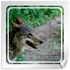 Red Wolf Canvas 20  x 20  (Unframed)