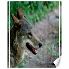 Red Wolf Canvas 11  X 14  9 (unframed)