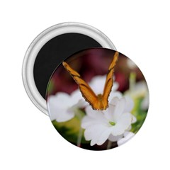 Butterfly 159 2.25  Button Magnet