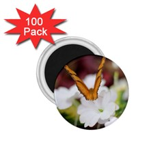Butterfly 159 1.75  Button Magnet (100 pack)