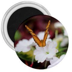 Butterfly 159 3  Button Magnet