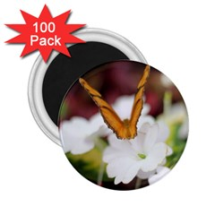 Butterfly 159 2 25  Button Magnet (100 Pack)