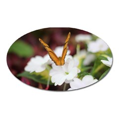 Butterfly 159 Magnet (Oval)