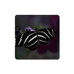 Butterfly 059 001 Magnet (Square)