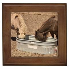 Shetland ponies Framed Ceramic Tile