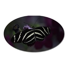 Butterfly 059 001 Magnet (oval)
