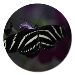 Butterfly 059 001 Magnet 5  (round)