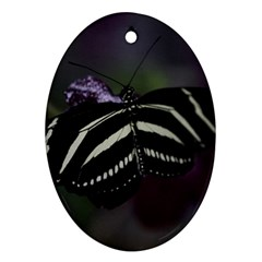 Butterfly 059 001 Oval Ornament (two Sides)