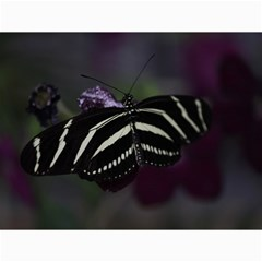 Butterfly 059 001 Canvas 12  X 16  (unframed)