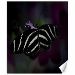 Butterfly 059 001 Canvas 8  x 10  (Unframed)