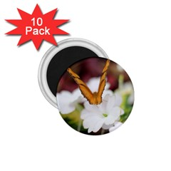 Butterfly 159 1 75  Button Magnet (10 Pack)