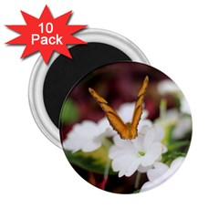 Orange Butterfly  2.25  Button Magnet (10 pack)