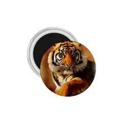 Tiger 1 75  Button Magnet