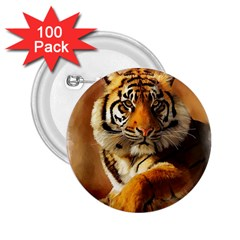 Tiger 2.25  Button (100 pack)