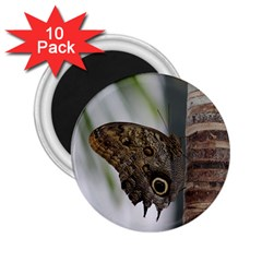 butterfly 130 2.25  Button Magnet (10 pack)