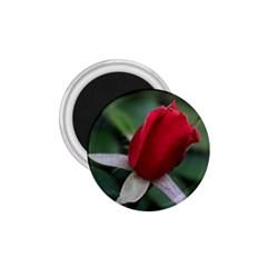 Sallys Flowers 032 001 1.75  Button Magnet