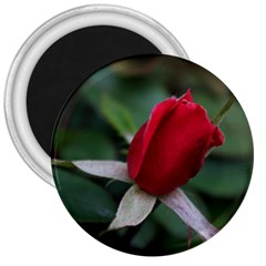 Sallys Flowers 032 001 3  Button Magnet