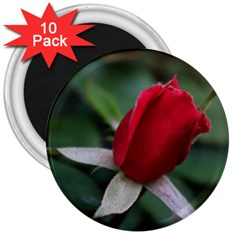 Sallys Flowers 032 001 3  Button Magnet (10 Pack)