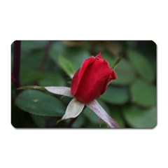 Sallys Flowers 032 001 Magnet (Rectangular)