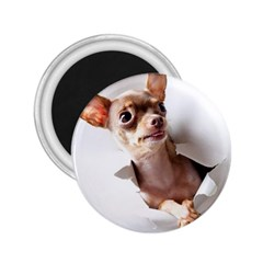 Chihuahua 2.25  Button Magnet