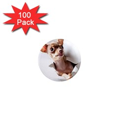 Chihuahua 1  Mini Button Magnet (100 pack)