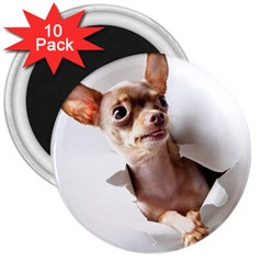 Chihuahua 3  Button Magnet (10 pack)