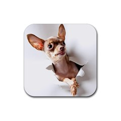 Chihuahua Drink Coaster (square)