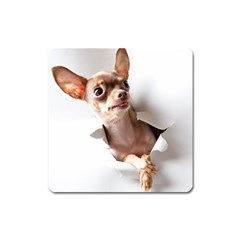 Chihuahua Magnet (square)