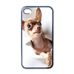 Chihuahua Apple iPhone 4 Case (Black)