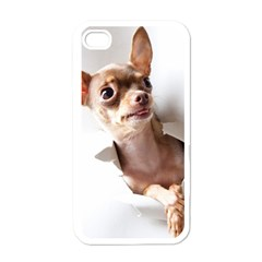 Chihuahua Apple iPhone 4 Case (White)