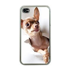 Chihuahua Apple Iphone 4 Case (clear)