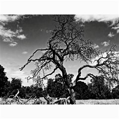 black and white dried tree  Canvas 36  x 48  (Unframed)