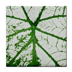 Leaf Patterns Ceramic Tile
