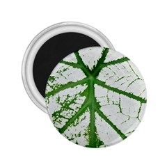 Leaf Patterns 2.25  Button Magnet