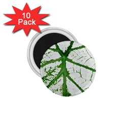 Leaf Patterns 1.75  Button Magnet (10 pack)