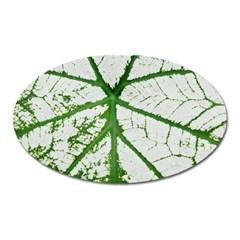 Leaf Patterns Magnet (Oval)