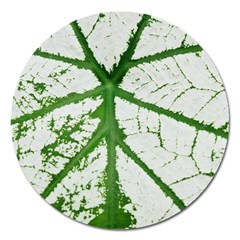 Leaf Patterns Magnet 5  (round)