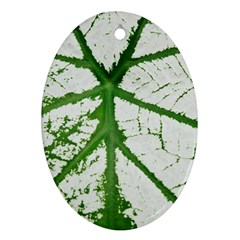 Leaf Patterns Oval Ornament (Two Sides)