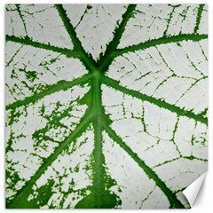 Leaf Patterns Canvas 12  x 12  (Unframed)