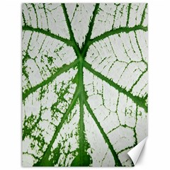 Leaf Patterns Canvas 12  X 16  (unframed)