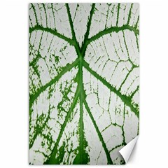 Leaf Patterns Canvas 12  x 18  (Unframed)