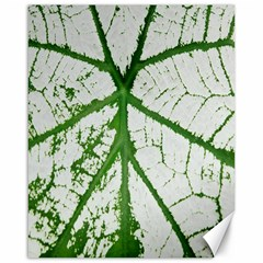 Leaf Patterns Canvas 16  x 20  (Unframed)