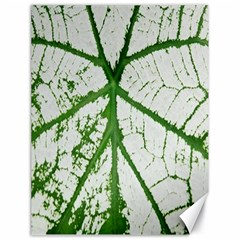 Leaf Patterns Canvas 18  X 24  (unframed)