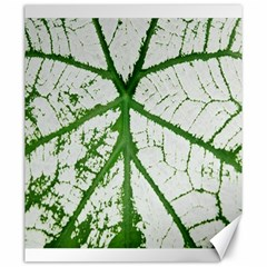 Leaf Patterns Canvas 20  X 24  (unframed)