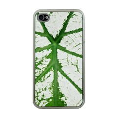 Leaf Patterns Apple iPhone 4 Case (Clear)