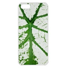 Leaf Patterns Apple iPhone 5 Seamless Case (White)