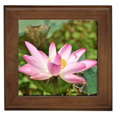 A Pink Lotus Framed Ceramic Tile