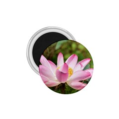A Pink Lotus 1 75  Button Magnet