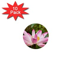A Pink Lotus 1  Mini Button (10 Pack)